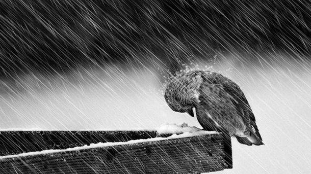 Пройдут сильные дожди с мокрым снегом
