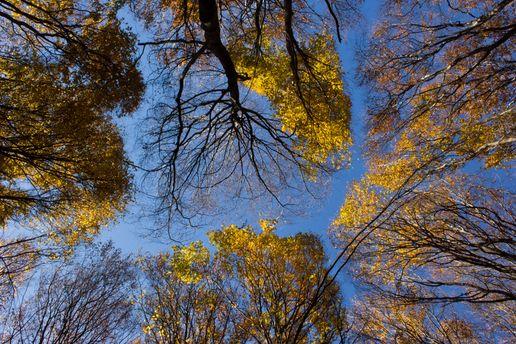 У ДСНС радять не ходити під деревами