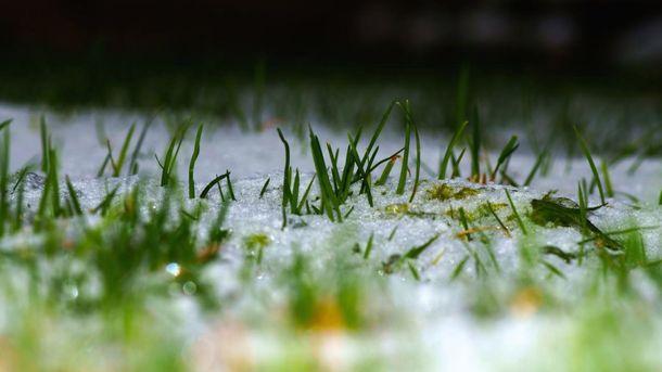 Трава під снігом