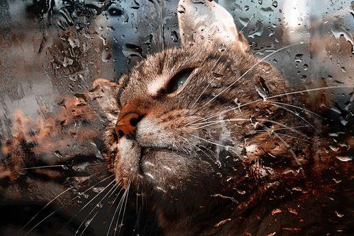 Идут дожди