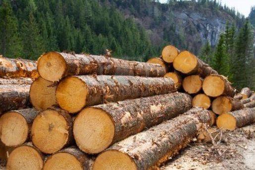 Tкспорт деревини