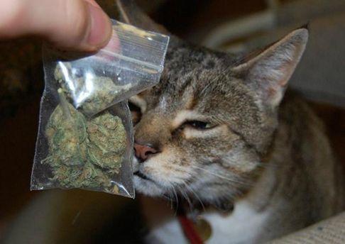 Кот с марихуаной