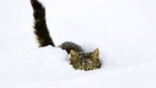 Сильные снегопады не ожидаются