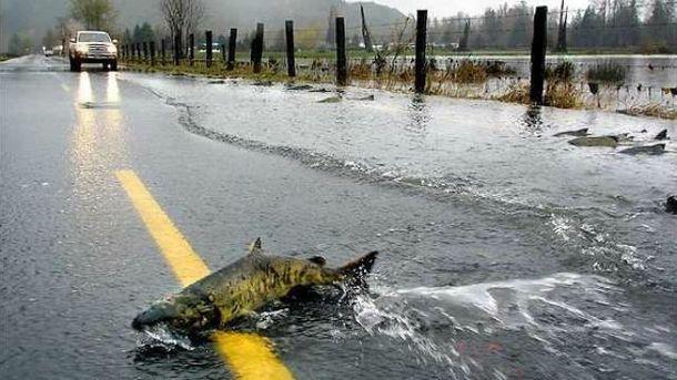 Рыбы заполонили дороги на западе США
