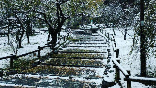 Снігопад в Токіо