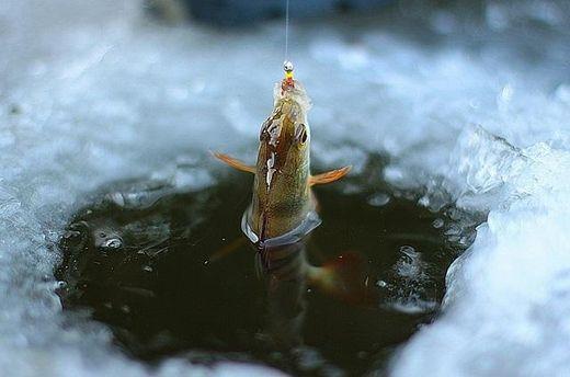 Вылов рыбы на зимовальных ямах в водоемах пока запрещен