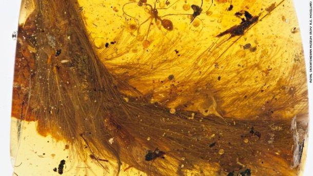 Вчені знайшли унікальний шматок динозавра