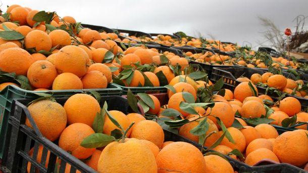 Общий вес мандарин составляла более 338 тонн