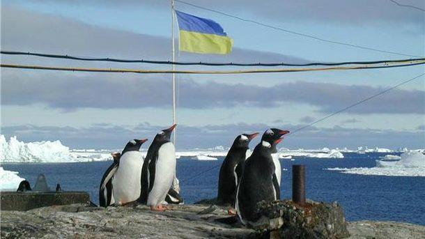 Пінгвіни в Антарктиді – звичне явище