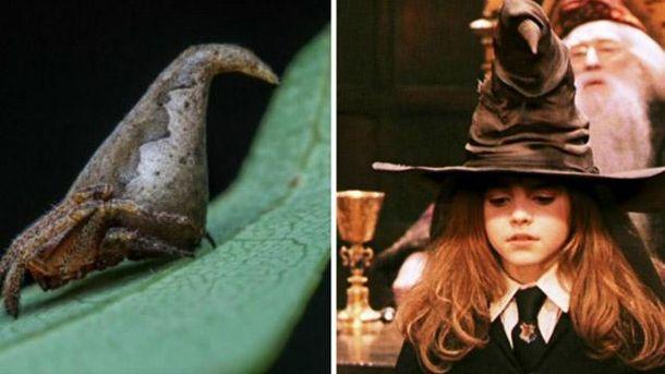 Паук удивительно похож на фантастическую шляпу