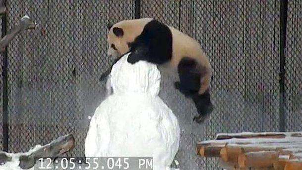 Драка панды и снеговика
