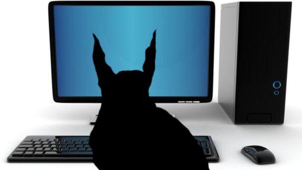 Животные наносят ущерб современным коммуникациям