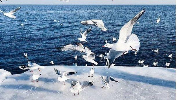 В Одессе зимняя сказка