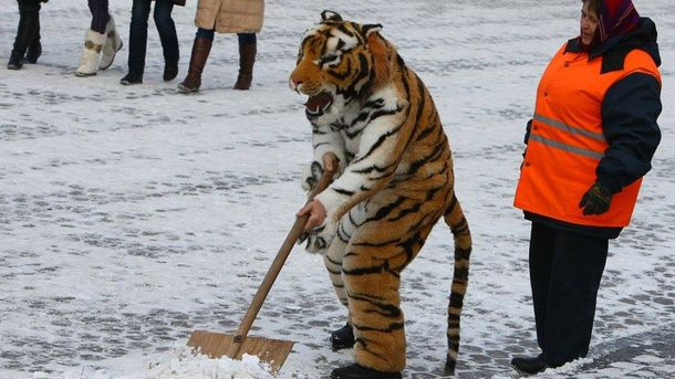 Сніжить у Києві