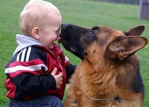 Німецька вівчарка до смерті покусала дитину