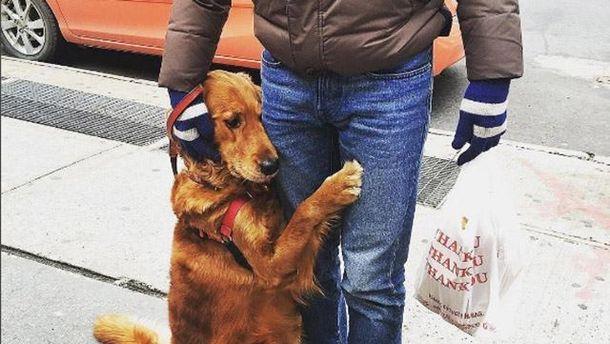 Собака, которая любит обниматься