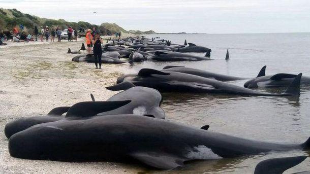 Самогубство китів