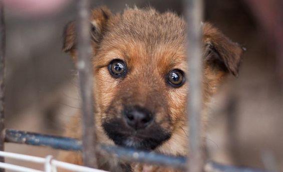 У Києві покажуть найкращі соціальні ролики про тварин