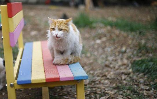 В Киеве котов могут признать частью экосистемы города