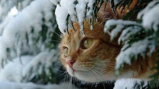 Чекаємо тепла