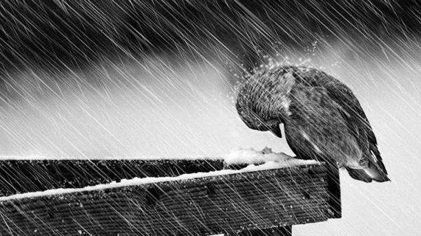 Будет мокрый снег и дождь