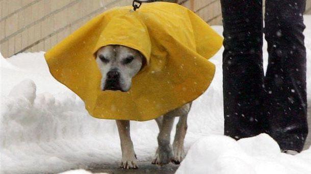 Сумний собака в снігу