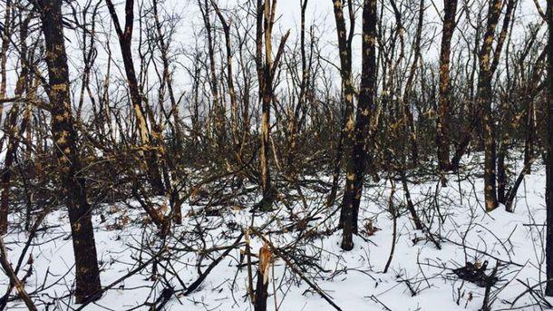 В лісі в районі Світлодарської дуги не лишилось жодного вцілілого дерева