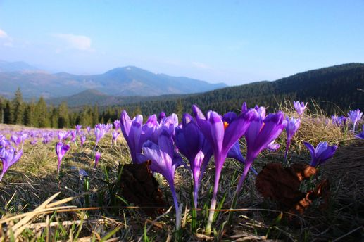 Квітучі місця України