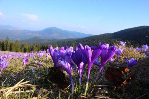Цветущие места Украины