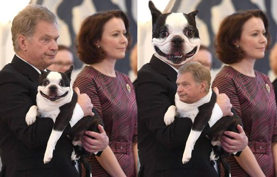 Президент Финляндии и его собака Ланну