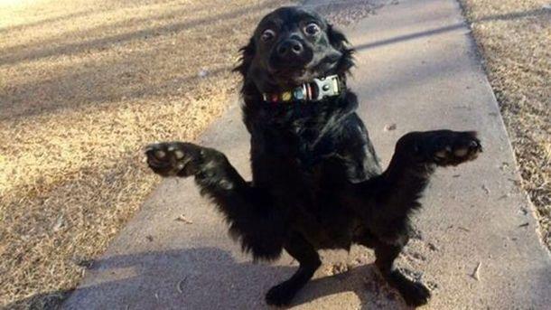 Этот милый пес покорил сеть