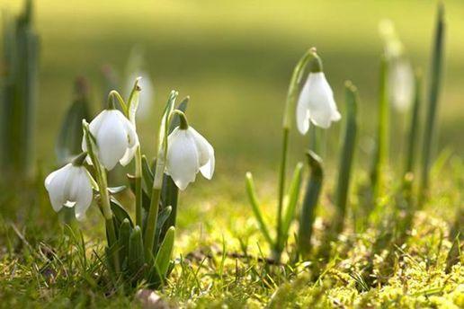 Сколько дополнительных выходных украинцы будут иметь весной