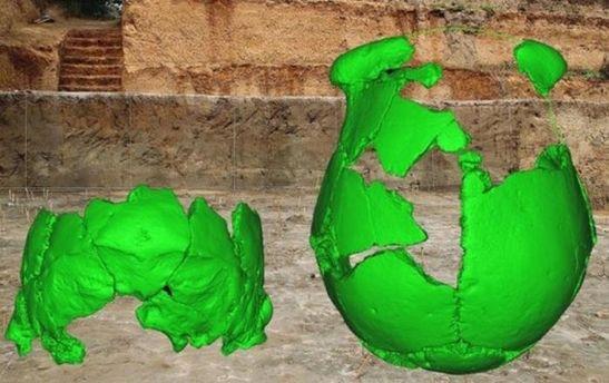 Останки черепів пралюдей