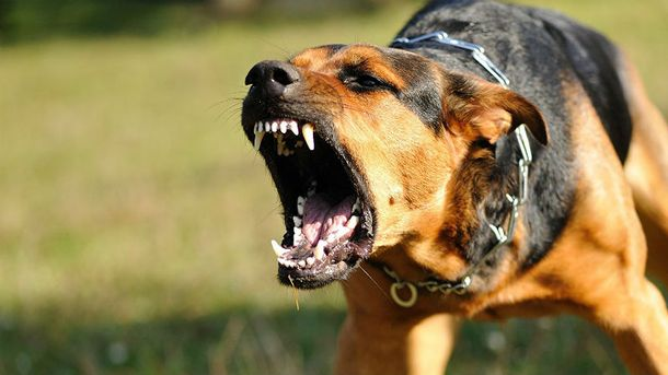 Собаки загрызли мужчину