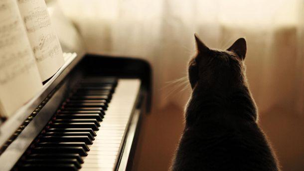 Кіт-меломан