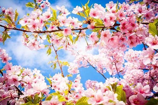 Невдовзі в Україну прийде весняне тепло