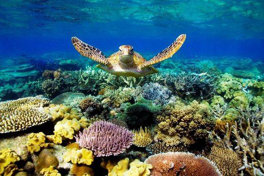 Большой барьерный риф может исчезнуть