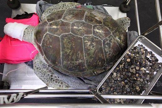 Черепаха Осмін