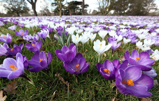 В Україну прийшла весна