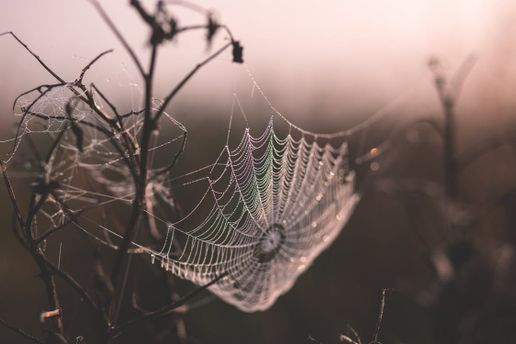 Павуки можуть винищити людей за рік