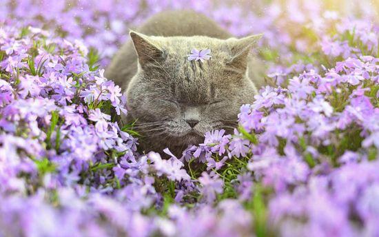 Тепла весна