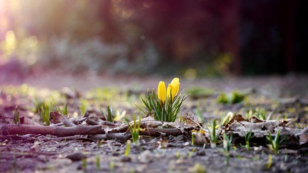 В марте было аномально тепло