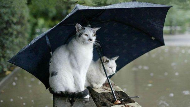 Падає дощ