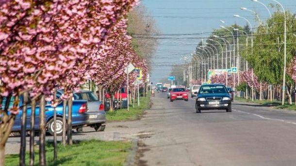 Сакуры в Мукачево
