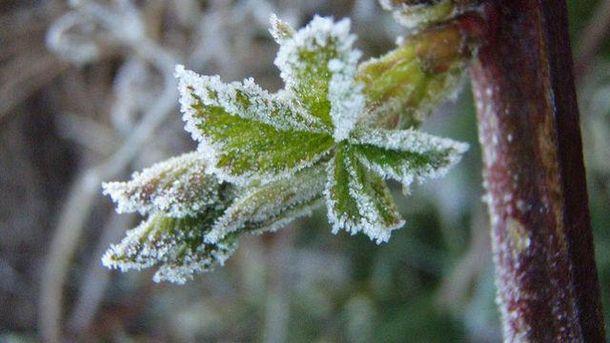 15 апреля возможны заморозки