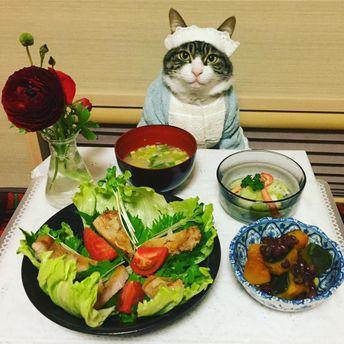 Кот в роли повара