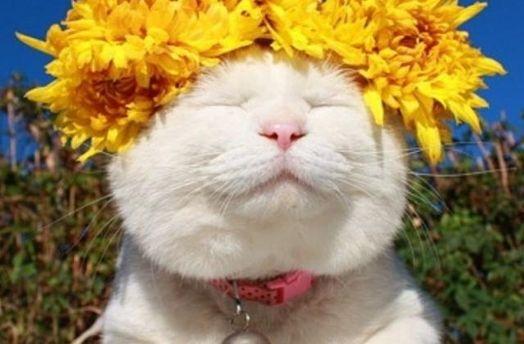 Кошка в веночке из цветов