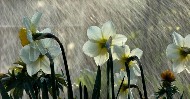 Холодная весна
