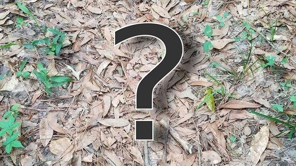 Где замаскировалась змея?