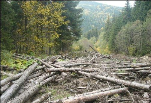 Как вернуть вырубленный украинский лес